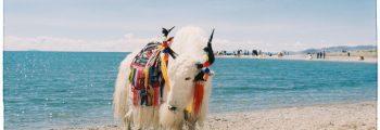 Tây Tạng vui nhộn