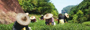 Triều Châu- Phúc Kiến-Mai Châu-Liên Nam-Quảng Châu